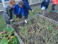 gardening (22).JPG