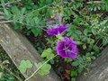 gardening (24).JPG
