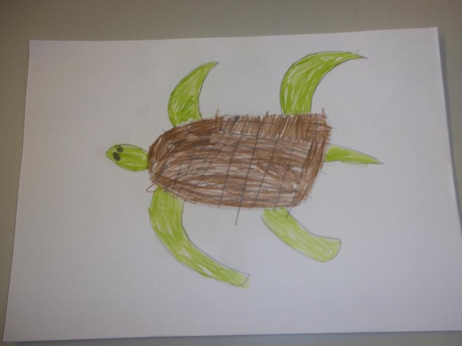 Year 4 Turtles