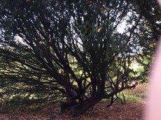 2 trip enchanted wood 026.JPG