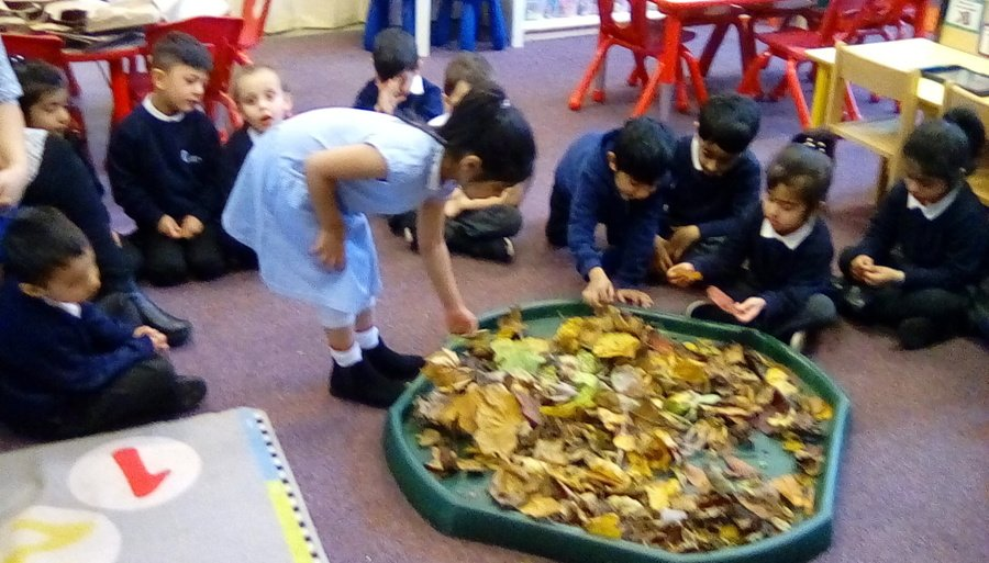 Investigating autumn leaves we collected with our grown ups whilst on an autumn walk.
