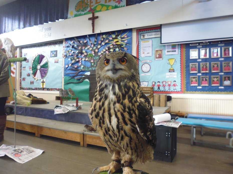 Hawks and Owls Visit