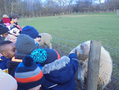 Y1 at Meanwood Valley Farm.png