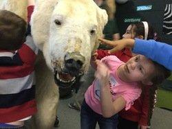 Polar bear (2).JPG