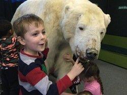 Polar bear (3).JPG