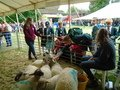 writtle food and farming day (26).JPG