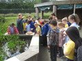 group pond dipping.JPG