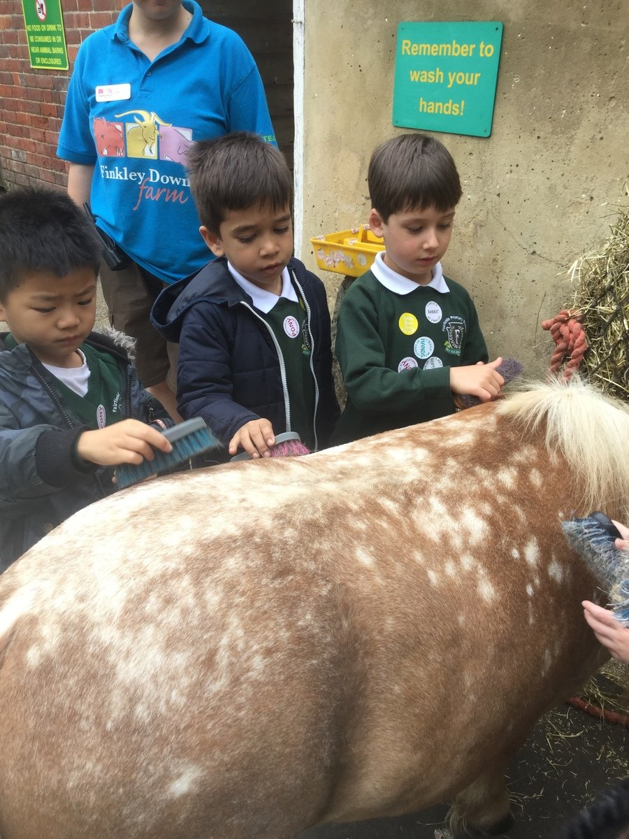 Grooming Freckles, the pony at Finkley Down Farm