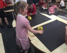 Yr 2 programming beebots to find the fruit to eat  2.jpg