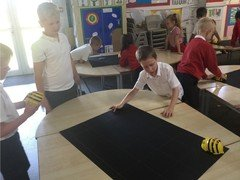Yr 2 programming beebots to find the fruit to eat 3.jpg