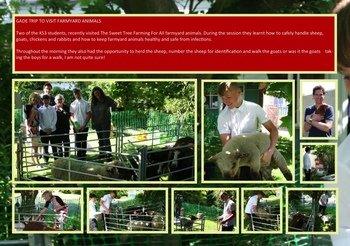 June - Farm Animal Visit