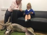 Willow Pet Dog Therapy Pic 26.JPG