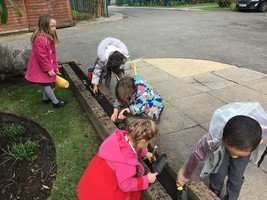 Reception busy planting Spring bulbs around school