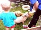 Animal Visits