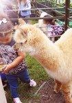 Petting animals<br>