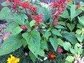 horticulture 1.JPG
