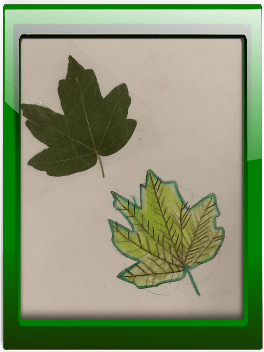 Our unlocking task was to find leaves from the playground and to sketch then in detail.