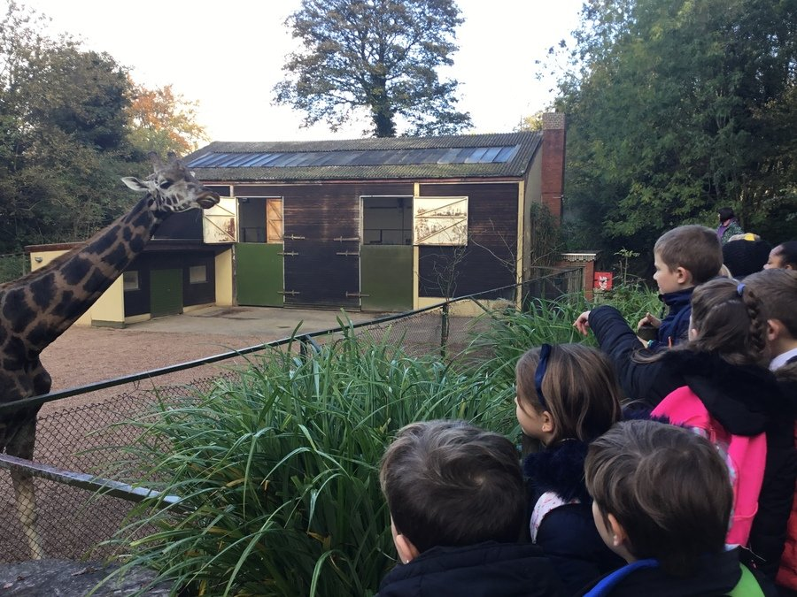 Living things and their habitats zoo visit for Y5