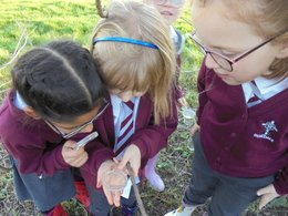 We used magnifying glasses to inspect them.