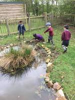 Pond habitats.jpg