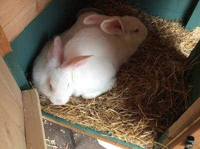 Meet Flopsy and Mopsy who are very popular with the children!