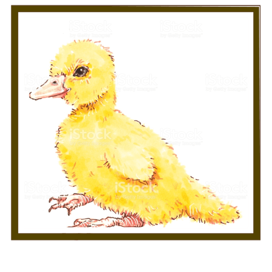 Nursery - Ducklings & Wagtails