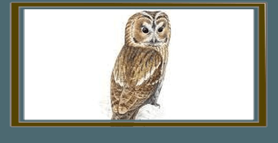 Owls - Miss Hardy & Mrs Gutteridge