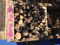 Bug Hotel Year 5 (2).png