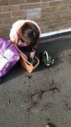Evie plant.jpeg