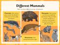 26.3 mammals life cycles.png
