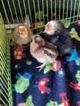 chicks 03.jpg