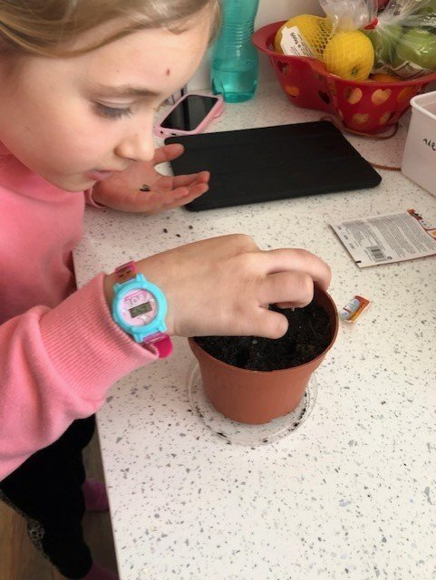 alex planting