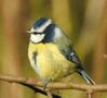 Answer - a bird's feather