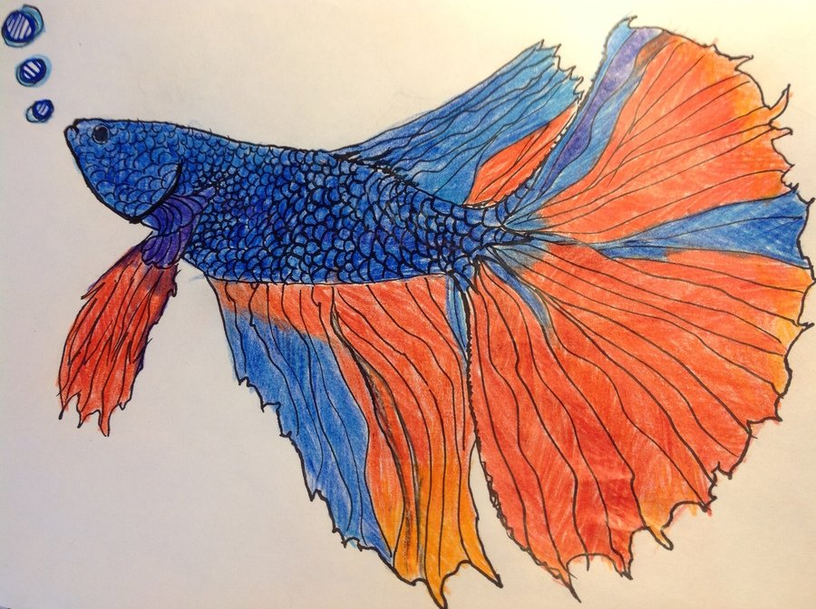 What a stunning fish by Hanna!