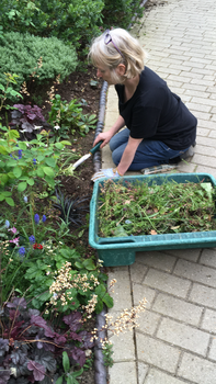 Mrs Reese weeding her garden