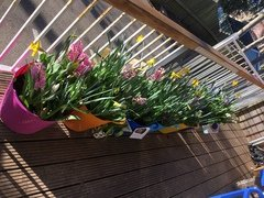 spring flowers 3.JPG