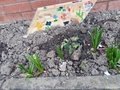 Planting in School  (7).jpg
