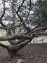 treeden.PNG