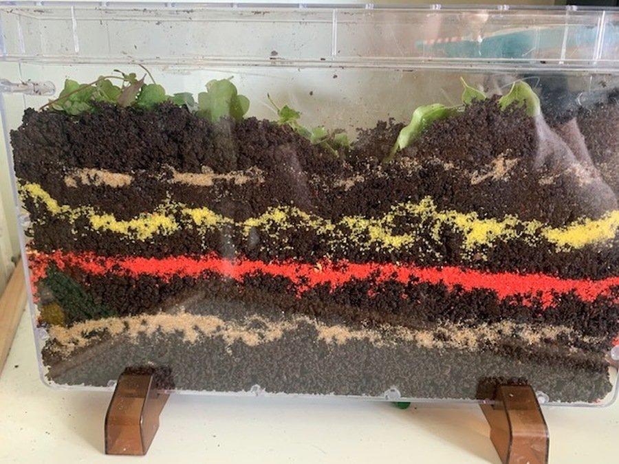 Well done Thalia. What a fantastic worm farm!