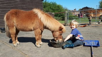 Luke is helping his pony Peanut with his breakfast.