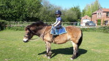Although Luke is missing school he is happy to be spending lots of time outside with his ponies.