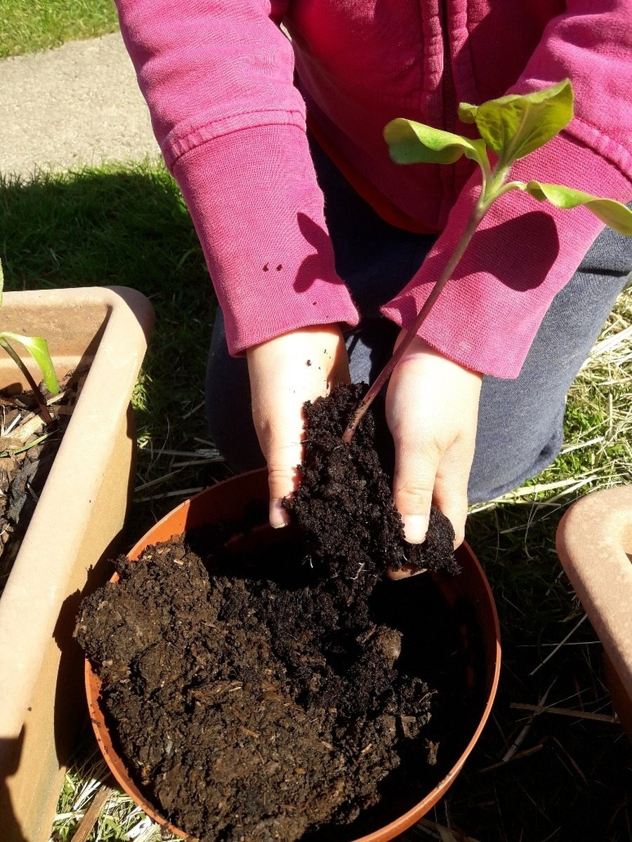 Our friend, Jessica, has been busy making her own compost in her compost bin, Collin. She is using it to plant her seedlings.