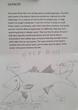 Harry's Kelp Bass.PNG