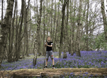 Rory's walk amongst the bluebells.PNG