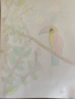 Ben Barlow - parrot.png