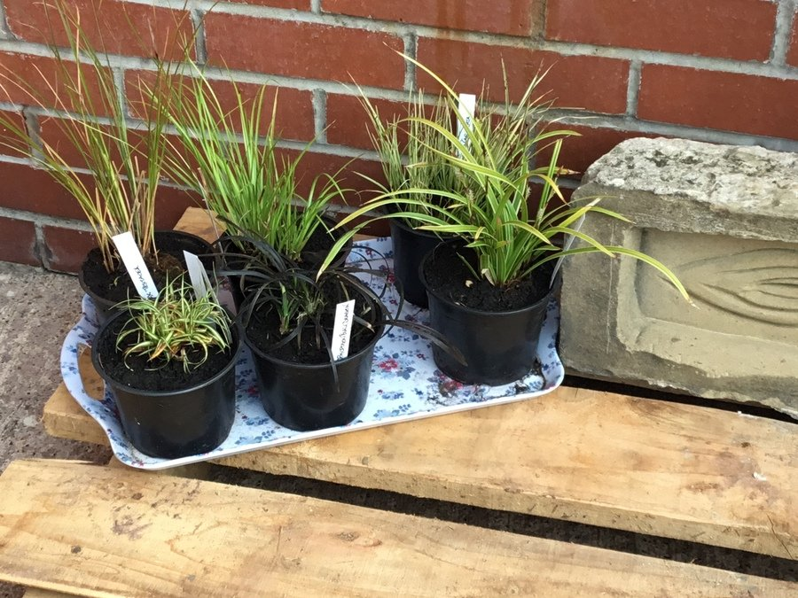 These are different types of grasses