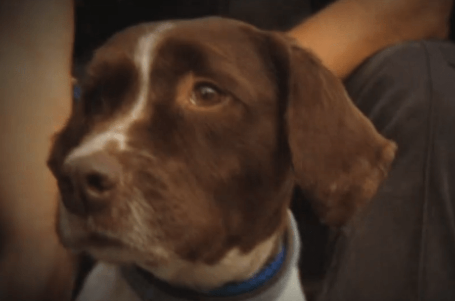 Watch Colin the dog training at Manchester Airport