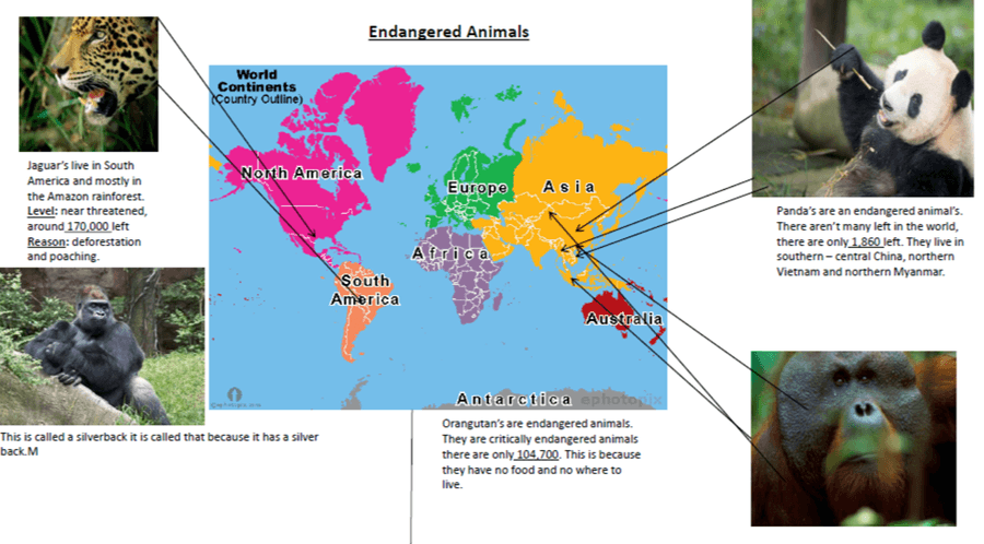 Endangered Animals by Charlie
