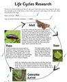 Life Cycle of a Mothby Jack E