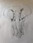 Phoebe E elephant art work.png